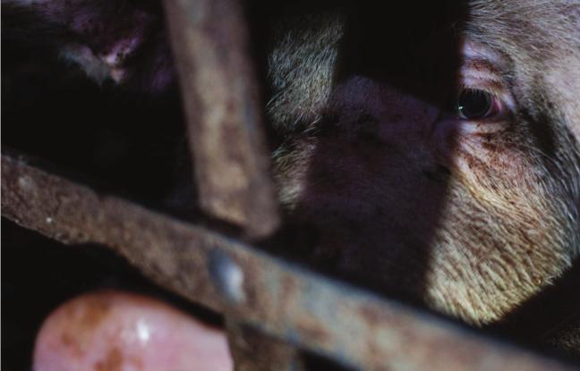 omialibera-sfruttamento-animali