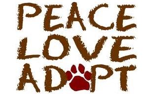 adottare cane omnialibera
